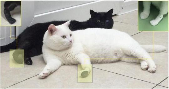 Русские ученые создали искусственные лапки для котиков
