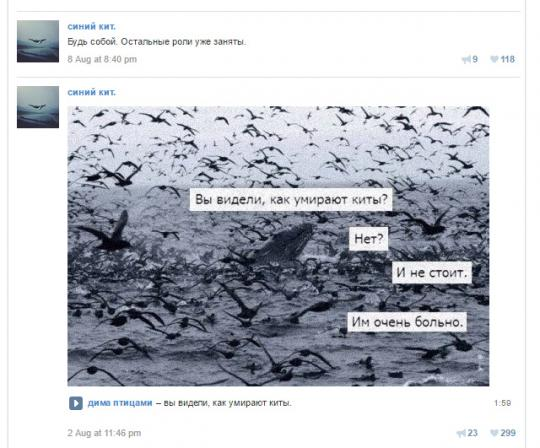 Паблик в группе `Синий кит`.